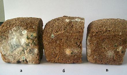 Влияние различных концентраций нанобиосеребра на проклевывание зерна пшеницы
