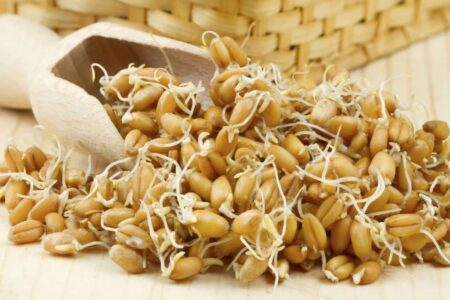 Некоторые особенности пророщенного зерна пшеницы